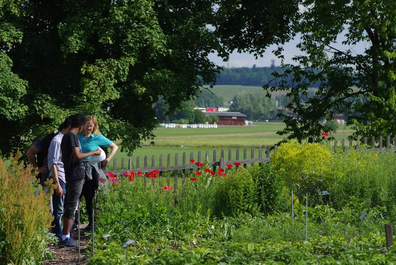 Pflanzgarten-Foto-OL-IMGP7862