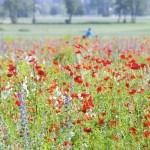Wunderland_Garten_Mohnfeld_IMGP3650