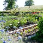 Wunderland_Garten_Nigella_IMGP3666
