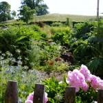 Wunderland_Garten_Pfingstrosen_IMGP3672