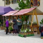 pflanzgarten_schloss_hegi_setzlingsmarkt_imgp7488_web