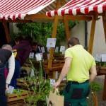 pflanzgarten_schloss_hegi_setzlingsmarkt_imgp7515_web