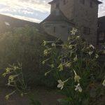 Pflanzgarten_Schloss_Hegi_Herbst_IMG_3671_web