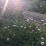 Pflanzgarten_Schloss_Hegi_Herbst_IMG_3673_web