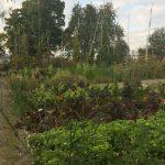 Pflanzgarten_Schloss_Hegi_Herbst_IMG_3679_web
