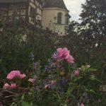 Pflanzgarten_Schloss_Hegi_Herbst_IMG_3680_web