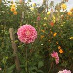 Pflanzgarten_Schloss_Hegi_Herbst_IMG_3684_web