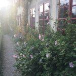 Pflanzgarten_Schloss_Hegi_Herbst_IMG_3689_web
