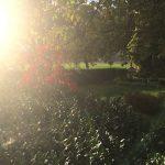Pflanzgarten_Schloss_Hegi_Herbst_IMG_3696_web