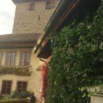 Pflanzgarten_Schloss_Hegi_Herbst_IMG_3701_web